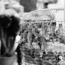 Bird Cage @ Myanmar