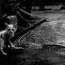 暗い隅っこで振り返る子猫