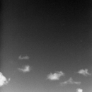 南国の空の下に山羊
