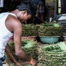Man Setting Out Betel Leaves