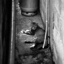 狭い通路に猫
