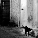 猫が壁際を歩いていた