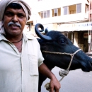 Man Walking With His Cow
