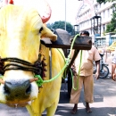 Yellow Cow In Pune  @ India