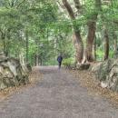 公園を早足で散歩する老人
