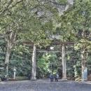 Big Wooden Torii