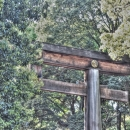 Torii In The Woods
