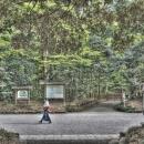 Woman Walking The Approach Of Meiji Jingu @ Tokyo