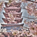 Cherry Blossom And Tower In Senso-Ji