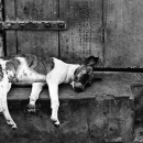 Sleeping Dog @ India