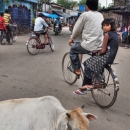 Cow And Bicycle @ India