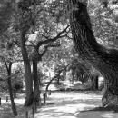 栗林公園の曲がっている木
