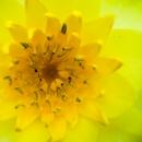Closeup Shot  Of A Yellow Flower