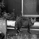 鋭い視線を投げかける猫