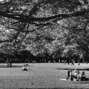Picnic In The Yoyogi Park