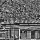 A House In The Garden