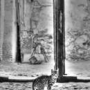 Cat @ Morocco