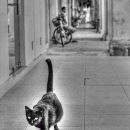 Black Cat Was Walking