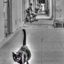 Black Cat @ Malaysia