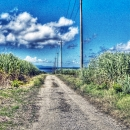 A Road In The Field @ Okinawa