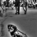 Smiling Dog @ Nepal