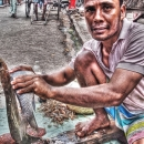 Man Cutting A Fish @ India