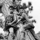 木にまとわり付いた男の子