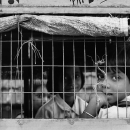 School Kids In The Cage @ India