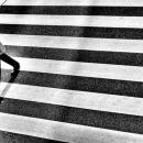 Man On The Zebra Crossing