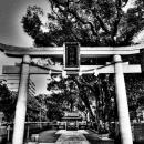 Torii Of Kumano Shrine @ Tokyo