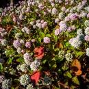 大量の花々