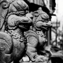 Ferocious Animals @ Nepal
