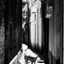 Dog Looked Back In The Alleyway
