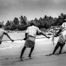 Fishermen Pulling A Rope @ Sri Lanka
