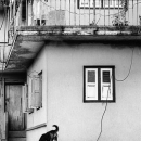 Woman On The Veranda And Dog On The Roof