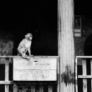 Monkey On The Donation Box