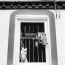 窓辺にいた凛々しい犬