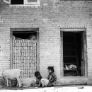 Sheep, Kids And Bricks @ Nepal