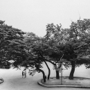 Two Figures With An Umbrella Under The Trees @ South Korea