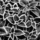 Rimmed Leaves