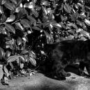 外国人墓地の黒猫