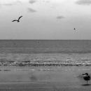 一本足で立つ鳥