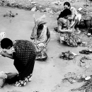 Women Doing The Laundry In The Mahananda River @ India