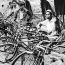 Row Of Cycle Rickshaws @ Bangladesh