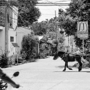 Motorbike, Horse Cart And McDonald's