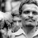 Man Holding A Falcon @ Bangladesh