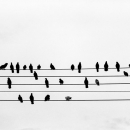 五線譜の上の鳩