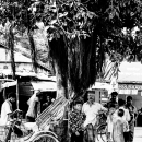 People Hanging Out Under The Tree @ Bangladesh