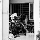 Dog And A Stuffed Lion