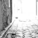 Cat Sitting In The Dim Lane